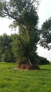 Wahrsagen – Kartenlegen Foto Copyright by Madame Destemona